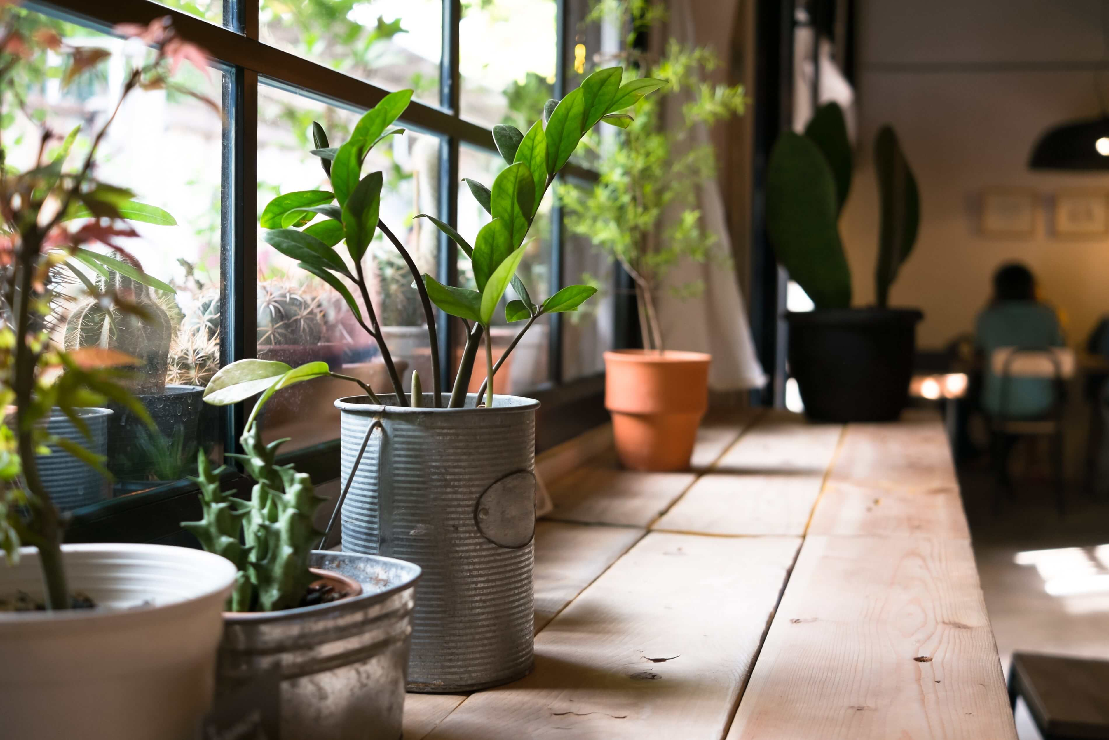 How to Enjoy a Breath of Fresh Air Indoors, The Natural Way?