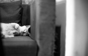 Furry Cats and Home